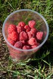 Raspberry in plastic glass Royalty Free Stock Photos