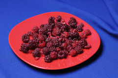 Raspberry on the plate. Stock Photos