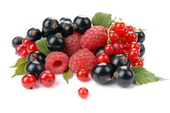 Raspberry , red and black currant Stock Photography