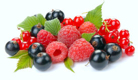 Raspberry red and black currant. On a white background Royalty Free Stock Image