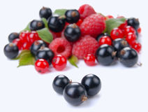 Raspberry red and black currant Royalty Free Stock Images