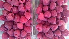 Raspberry, Red raspberry Stock Photo