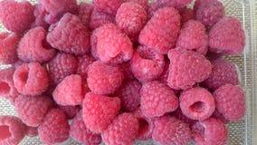 Raspberry, Red raspberry Stock Images