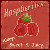 Raspberry retro poster Royalty Free Stock Photo
