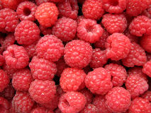 Raspberry. Ripe raspberry as a background Stock Images