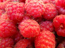 Raspberry. Ripe and red succulent raspberry Stock Image