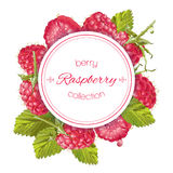 Raspberry round banner. Vector raspberry round banner. Design for sweets and pastries filled with berry, dessert menu,natural cosmetics, health care products Stock Images