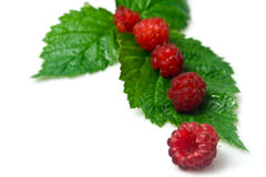 Raspberry in a row Stock Image