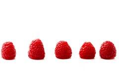 Raspberry row Royalty Free Stock Image