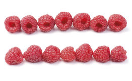 Raspberry Row. Various fresh organic garden raspberries isolated on white background. Arranged in a row royalty free stock photo