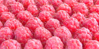 The Raspberry by rows. Berries, raspberries arranged in rows, close-up, close-up royalty free stock image
