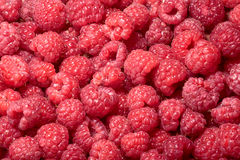 Raspberry (Rubus idaeus) background Royalty Free Stock Image