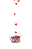 Raspberry`s falling. Finger.s dropping Raspberry`s into bowl one by one Royalty Free Stock Image