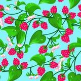 Raspberry seamless Royalty Free Stock Photography