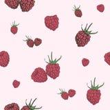 Raspberry seamless pattern. Stock Photos