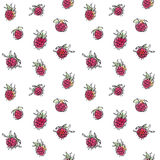 Raspberry seamless pattern. Hand drawn raspberry seamless pattern. Red ripe berries background Royalty Free Stock Images