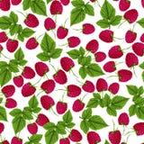 Raspberry seamless pattern Stock Photos
