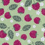 Raspberry seamless pattern. Raspberries with leaves and flowers on shabby background. Original simple flat illustration. Shabby style stock illustration