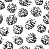 Raspberry seamless pattern. Vector drawing. Isolated berry sketch on white background. Summer fruit engraved style background. Detailed hand drawn vegetarian vector illustration