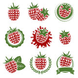 Raspberry set. Vector Stock Photo