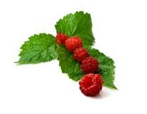 Raspberry on a sheet Stock Photo