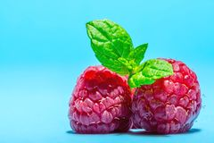 Raspberry with sprig of mint leaves on top macro texture on blue background. Raspberry with sprig of mint leaves on top macro texture close-up on blue background Royalty Free Stock Images