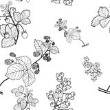 Raspberry, strawberry, blueberry seamless pattern, black  drawing, transparent background. Royalty Free Stock Image