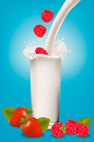 Raspberry and strawberry falling into the milk Royalty Free Stock Images