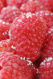 Raspberry with sugar. Ripe red raspberries sprinkled a little with sugar closeup Stock Images