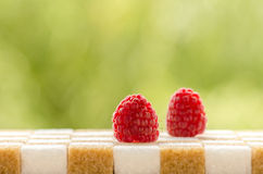 Raspberry on sugar Stock Images