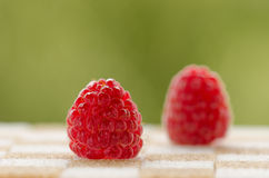 Raspberry on sugar Stock Photo