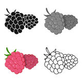 Raspberry, sweet fruit.Fruit single icon in cartoon style vector symbol stock illustration web. Raspberry, sweet fruit.Fruit single icon in cartoon style vector Royalty Free Stock Photo