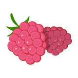 Raspberry, sweet fruit.Fruit single icon in cartoon style vector symbol stock illustration web. Raspberry, sweet fruit.Fruit single icon in cartoon style vector Stock Image