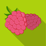 Raspberry, sweet fruit.Fruit single icon in flat style vector symbol stock illustration web. Raspberry, sweet fruit.Fruit single icon in flat style vector Royalty Free Stock Image