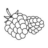 Raspberry, sweet fruit.Fruit single icon in outline style vector symbol stock illustration web. Raspberry, sweet fruit.Fruit single icon in outline style vector Stock Photo