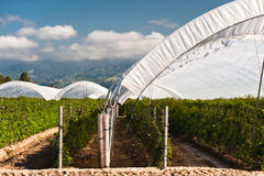 Raspberry Tents royalty free stock photography