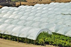 Raspberry Tents in Central California Royalty Free Stock Images