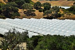 Raspberry Tents in Central California Royalty Free Stock Photography