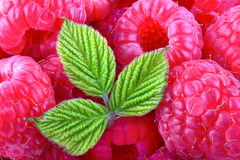 Raspberry texture. Raspberries background. Ripe sweet raspberries with leaf close-up stock images