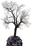 Raspberry tree of fruit mulberry Stock Photos