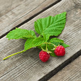 Raspberry twig Royalty Free Stock Images