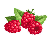 Raspberry. Vector Illustration. Stock Image
