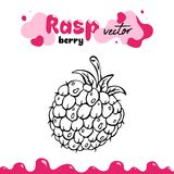 Raspberry vector illustration, berry clipart. Raspberry vector illustration for logo, design.  raspberry vector. Illustration for menu, package. Hand drawn Royalty Free Stock Photos