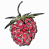 Raspberry. Vector illustration Royalty Free Stock Images