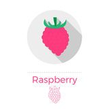 Raspberry vector illustration. In flat design style with long shadow. Round shape, isolated on white background. Thin line icon included stock illustration