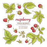 Raspberry vector set. Raspberry berries and leaves vector set on whte background Royalty Free Stock Photography