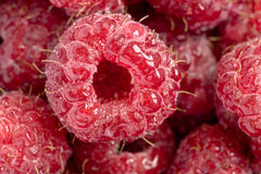 Raspberry with water drops close up. Raspberry with water drops (extreme macro Stock Photography