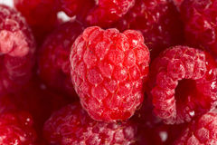 Raspberry with water drops close up. Raspberry with water drops (extreme macro Stock Photos