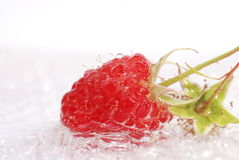 Raspberry in a water Stock Photography