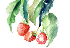 Raspberry, watercolor illustration Royalty Free Stock Images